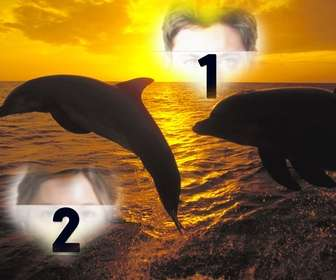 Colagem para duas fotos em forma de coração e golfinhos saltando.