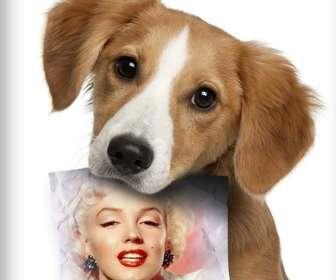 Fotomontagem com cachorro triste olhando para o seu proprietário, que tem um papel na boca, onde você pode fazer upload de uma foto.