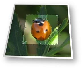Ferramenta on-line de fotos e imagens de colheita.