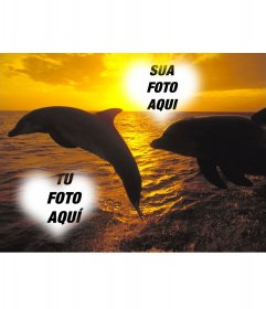 Fotomontagem modo de colagem em que duas fotos aparecem em dois quadros em forma de coração, entre dois golfinhos que saltam fora d'água em um pôr do sol do oceano. Ideal para composição fotográfica pode-mail neste Dia dos Namorados, Dia dos Namorados.