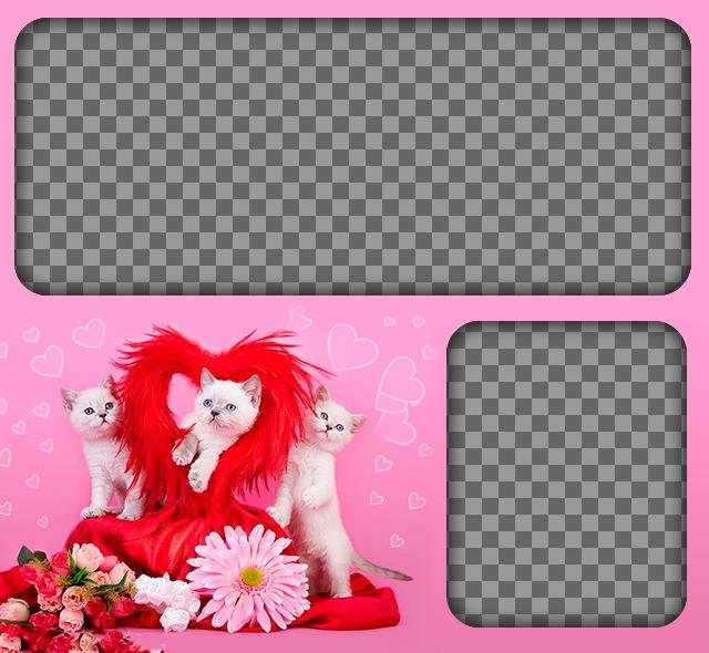Fotomontagem romântico com gatinhos e corações com um fundo rosa para colocar duas imagens de amor