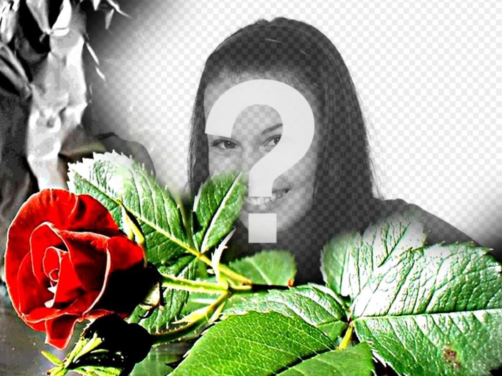 Moldura personalizável se um eed aumentou, ideal para os amantes