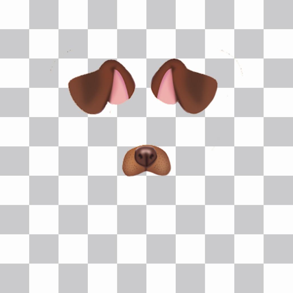 Cole as orelhas e o nariz de um cachorrinho na sua foto livre